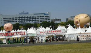 27 - Pig Festival